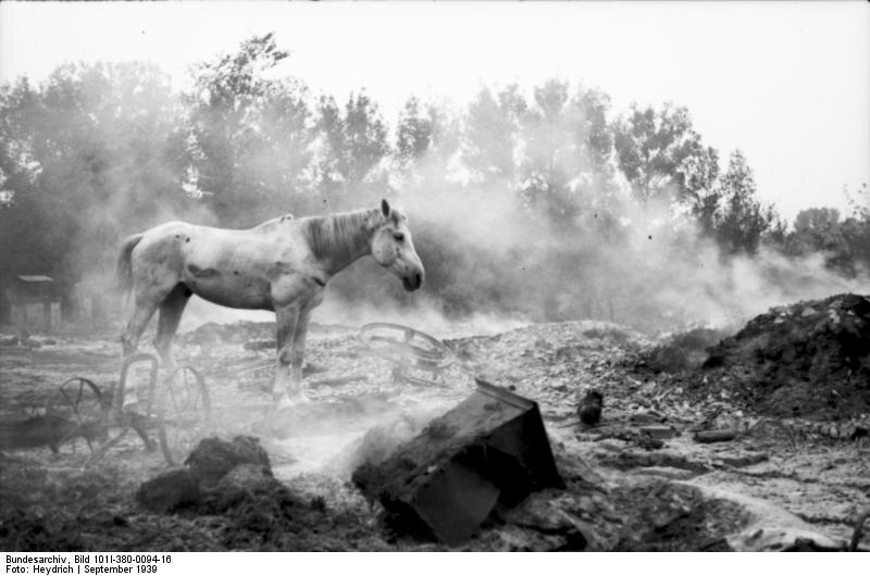 """Koń na polskim polu bitwy """"Niemy świadek polskiej destrukcyjnej furii"""" – ogłosili niemieccy propagandziści, kłamliwie obarczając winą za wojnę polską stronę"""