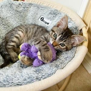 Historia przyjaźni kotki Matyldy i jej pluszowej zabawki, Lamby Beans