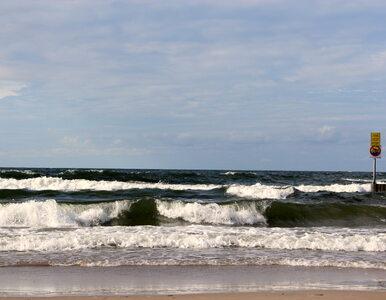 Przerażający widok na plaży. Znaleziono już kilkanaście martwych fok