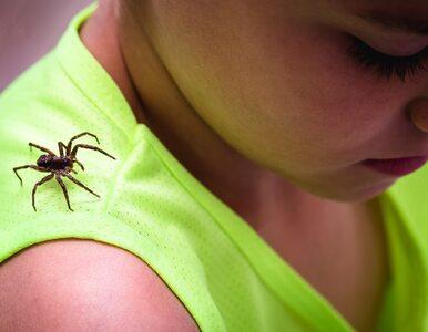 Ugryzienie pająka powoduje ból i obrzęk. Czy pająki w Polsce są jadowite?
