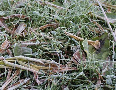 Uwaga na przymrozki. Synoptycy przewidują też opady śniegu