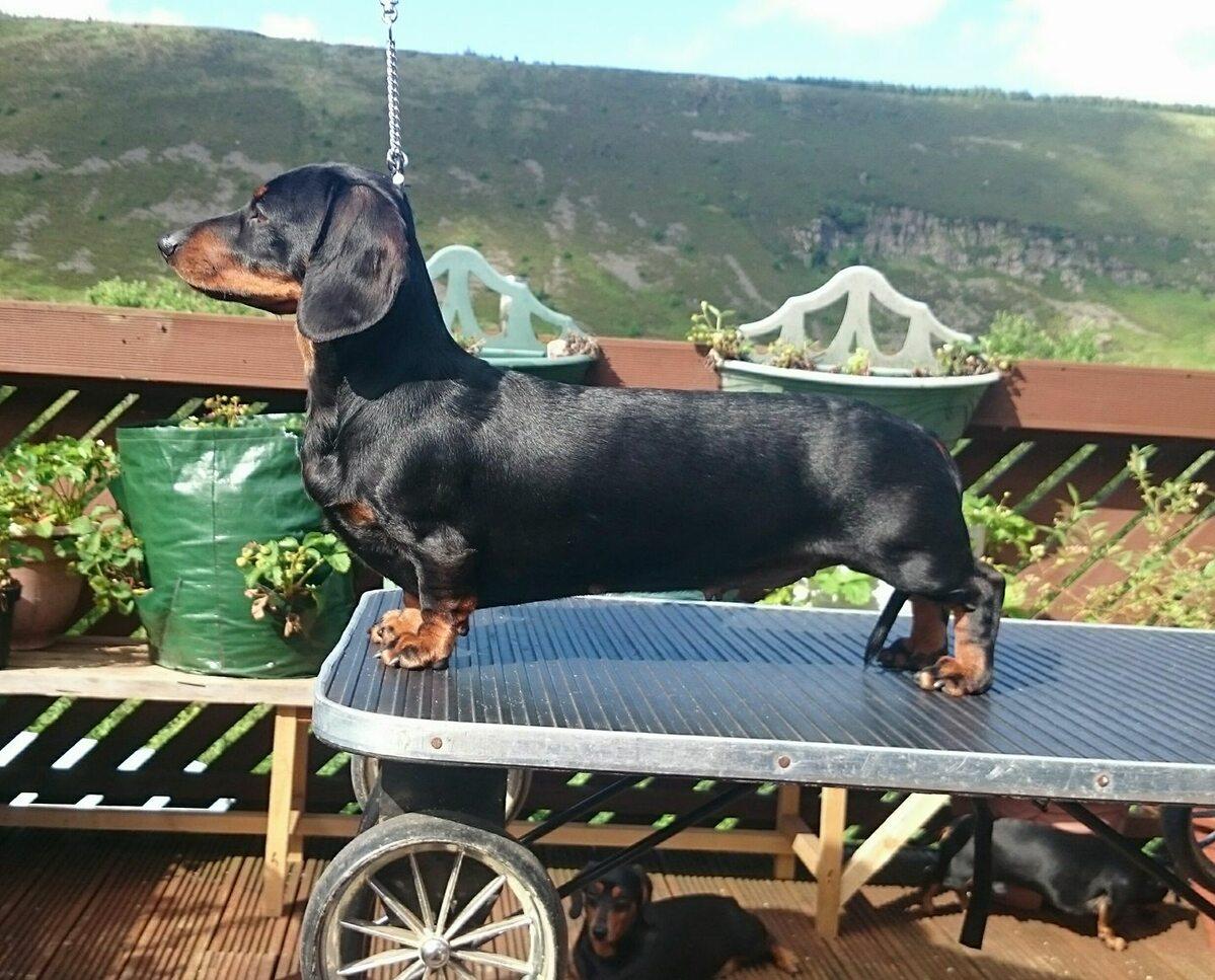 Jeden z psów Liama Beacha