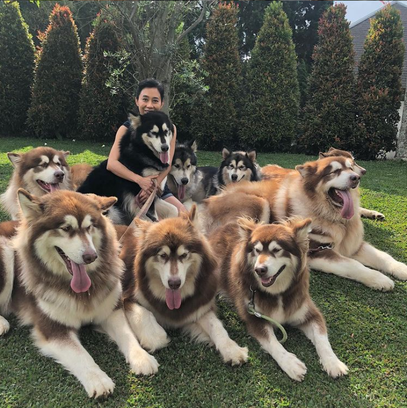 Właścicielka ze swoimi psami