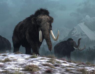 Spowodowała 1400-letnią zimę, przez nią zginęły mamuty i nieomal ludzie....