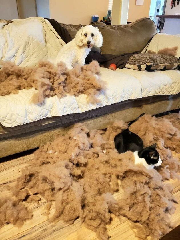 No i kto jest winny: kot czy pies?