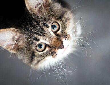 Naukowcy łączą koty z chorobami psychicznymi. Alarmujące wyniki badań