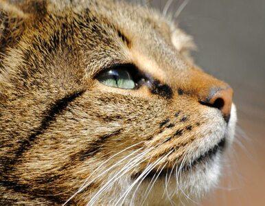 Małopolska: wściekły kot pogryzł dziecko
