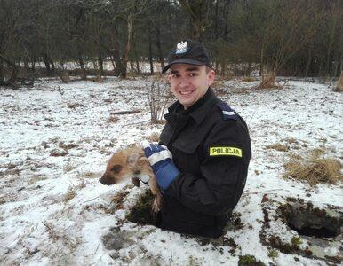 Nietypowa interwencja w Cierpiszewie. Policjant uratował małego dziczka