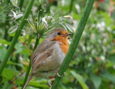 Tysiące ludzi będzie obserwować ptasi bieg z przeszkodami