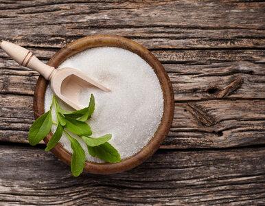Stewia – co to jest i jaki ma wpływ na zdrowie?