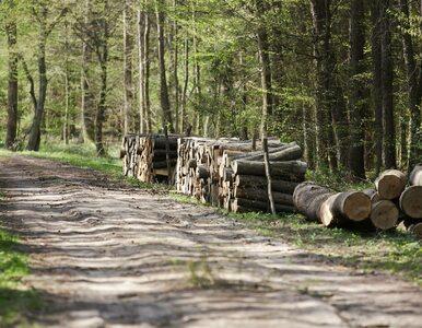 Lasy Państwowe biorą się za produkcję prądu. Wybudują farmy...