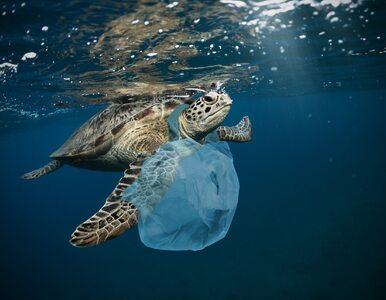 Atlantyk brudniejszy niż się tego spodziewano. Plastik trafia także do...