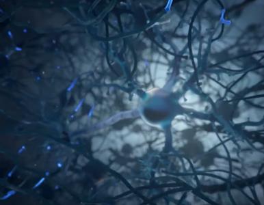 Naukowcy odkryli dwa nowe typy komórek glejowych
