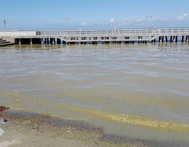 Sinice uprzykrzają życie turystom. Zamknięto większość kąpielisk w...