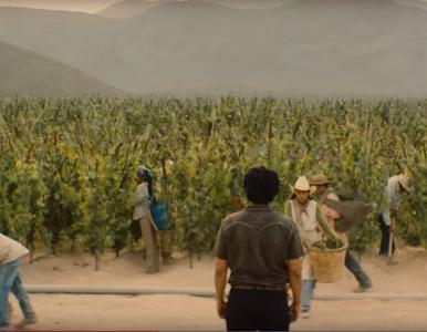 """Jeszcze więcej """"Narcos"""". Netflix właśnie zapowiedział drugi meksykański..."""