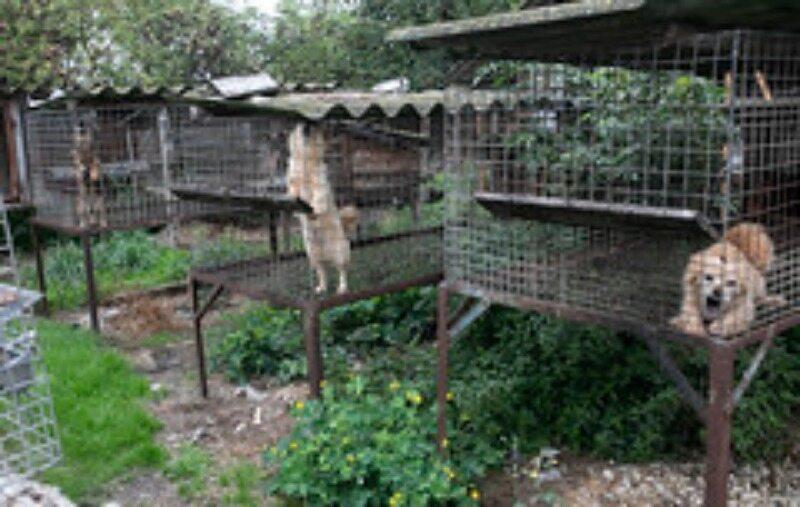 Interwencja Stowarzyszenia Otwarte Klatki i Ekostraży na fermie futrzarskiej