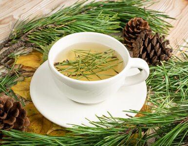 Herbatka z igieł sosny. Wzmocni odporność i ukoi zmysły
