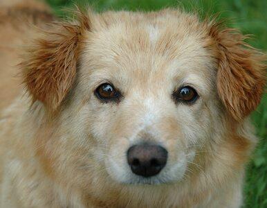 Psy i koty są oddawane do eutanazji z powodu koronawirusa? Jest...