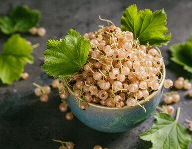 Biała porzeczka owocem idealnym dla alergików. Rewelacyjnie działa na...