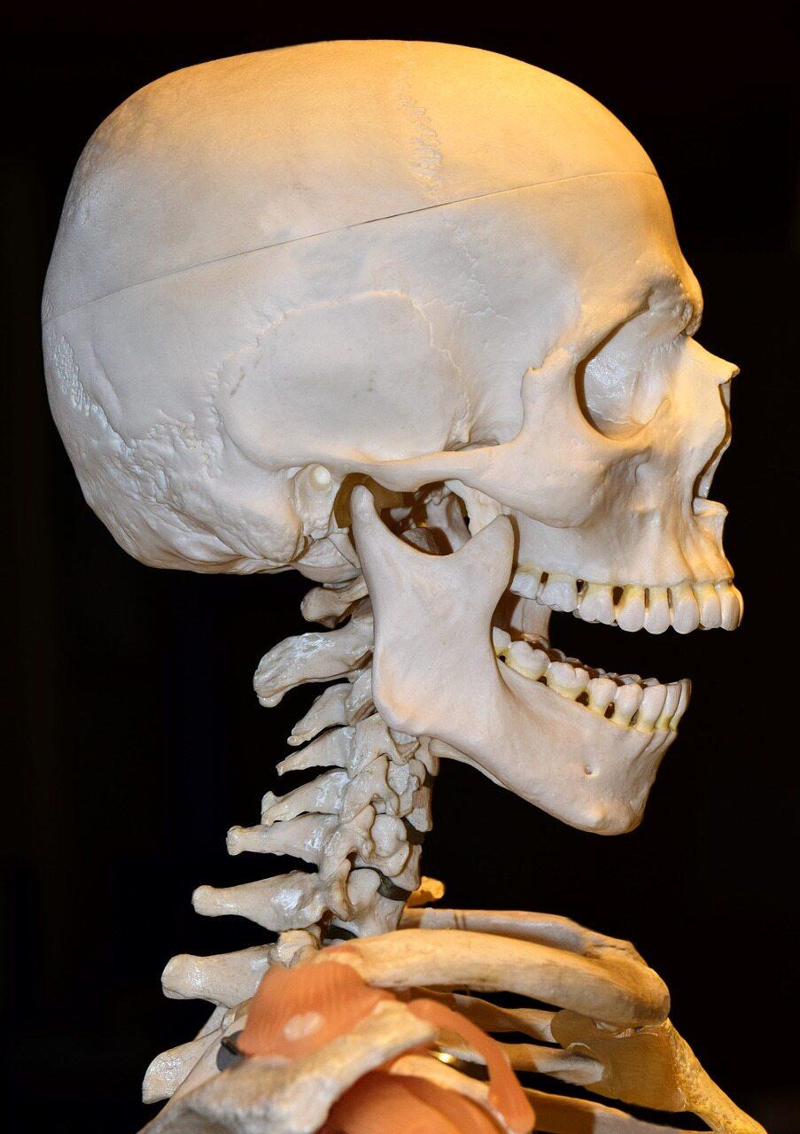 W skład kości głowy NIE WCHODZI?