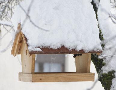 Nowy wygląd drewnianych domków dla ptaków