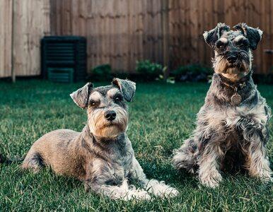 Jaką karmę kupić dla psa? Skorzystaj z RankingKarm.pl