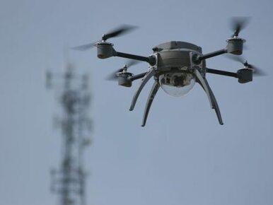 Eksperci OBWE, dron i psy tropiące w miejscu katastrofy MH17