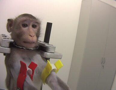 Barbarzyńskie eksperymenty na małpach, kotach i psach. Laboratorium...