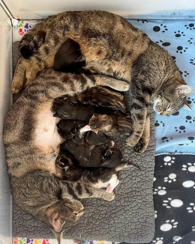 Koty w ośrodku Nashville Cat Rescue