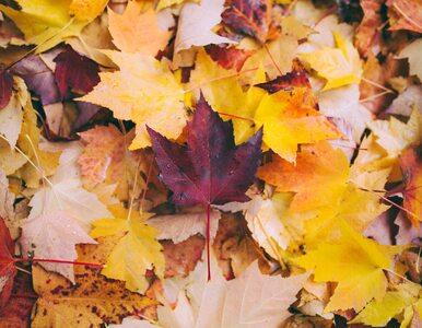 Skarb spadający z drzew. Nie grab jesiennych liści