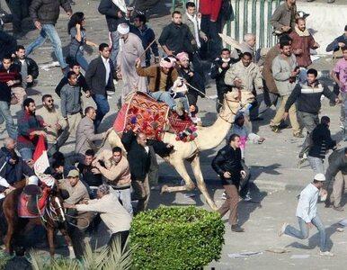 """Ludzie Mubaraka nie odpowiedzą za """"wielbłądzią bitwę"""""""