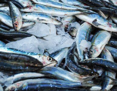 Chcesz być eko? Sprawdź, jaką rybę kupić na święta