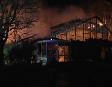 Pożar małpiarni w zoo, zginęło ponad 30 zwierząt. Prawdopodobną...
