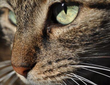 79-latek lubi porządek, więc... znęcał się nad kotami?
