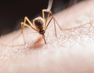 Komar, meszka, a może… pluskwa? Jak objawiają się ukąszenia domowego...