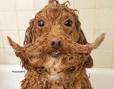 """""""Podeślijcie najgorsze zdjęcia waszych psów"""". Internauci nie zawiedli"""