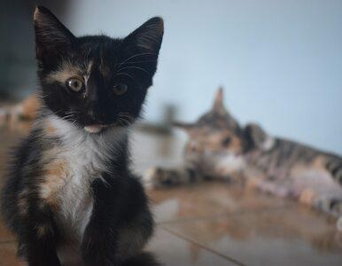 50-latek uderzył kobietę żywym kotem. Jej nic się nie stało, ale zwierzę...