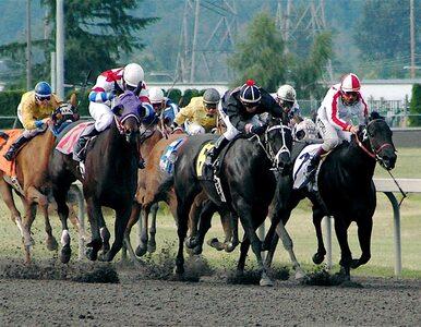 PiS chce nowelizować ustawę o wyścigach konnych. Nowoczesna: Kolejna...