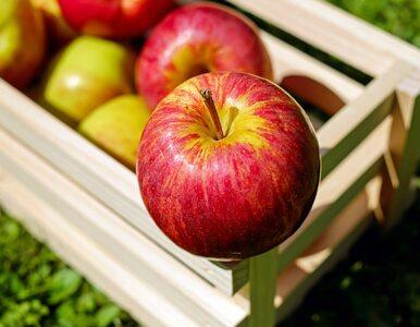 Korzyści zdrowotne jabłek. Czy jedno dziennie faktycznie uchroni przed...