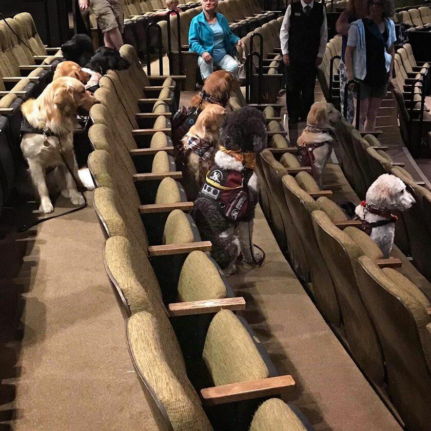 Psy na przedstawieniu w teatrze