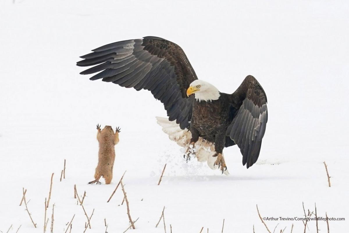 Finaliści konkursu Comedy Wildlife Photo Awards 2021