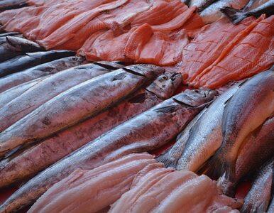 Co wiemy o jakości ryb na Pomorzu po kontroli Inspekcji Handlowej? Nic...