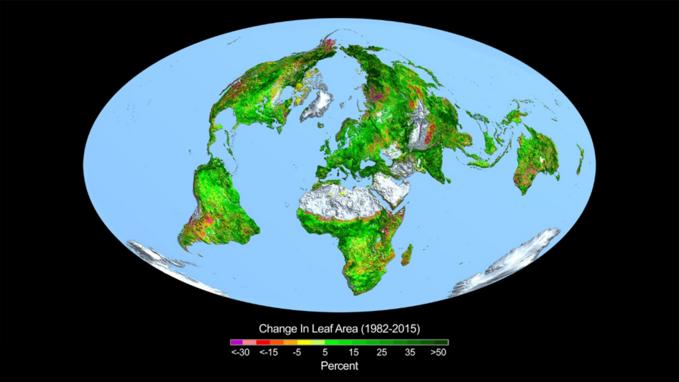 Zmiany wpowierzchni liści wlatach 1982-2015