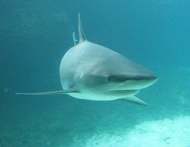 Rekin rozszarpał 15-latkę tuż przy brzegu