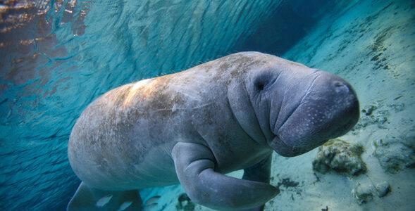 QUIZ. Fascynujący świat zwierząt. Jak dobrze go znasz?