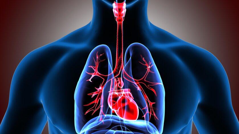 Ciało człowieka, serce, płuca zdj. ilustracyjne