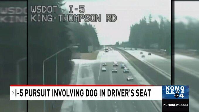 Właściciel uczył jeździć psa natej autostradzie