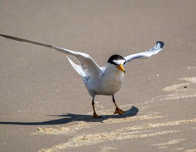 Na Jeziorze Goczałkowickim powstała wyspa dla ptaków