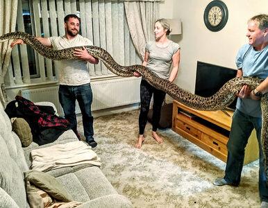 W trzypokojowym domu mieszka z żoną, dziećmi i 120-kilogramowym pytonem