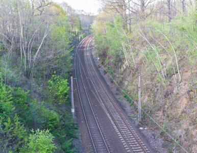 Złotego pociągu na 65. kilometrze nie ma, ale to nie koniec poszukiwań